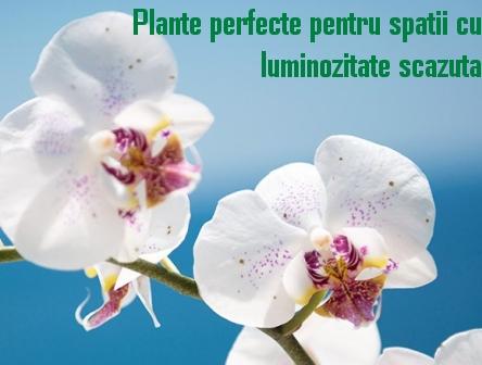 Plante pentru spatii cu luminozitate scazuta
